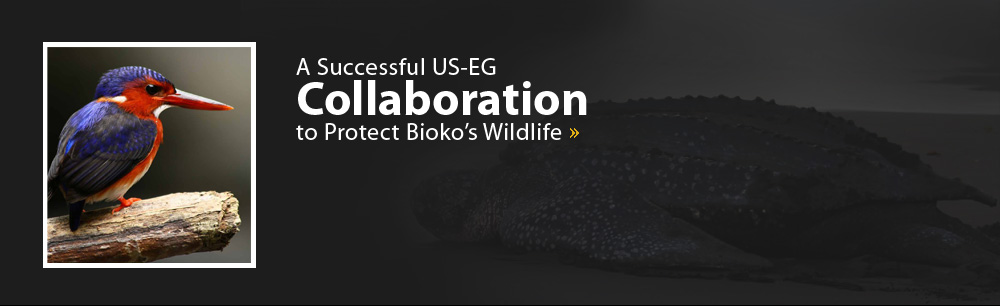 A Successful US-EG Collaboration to Protect Bioko's Wildlife